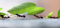 a-relacao-das-formigas-com-os-seres-humanos-3